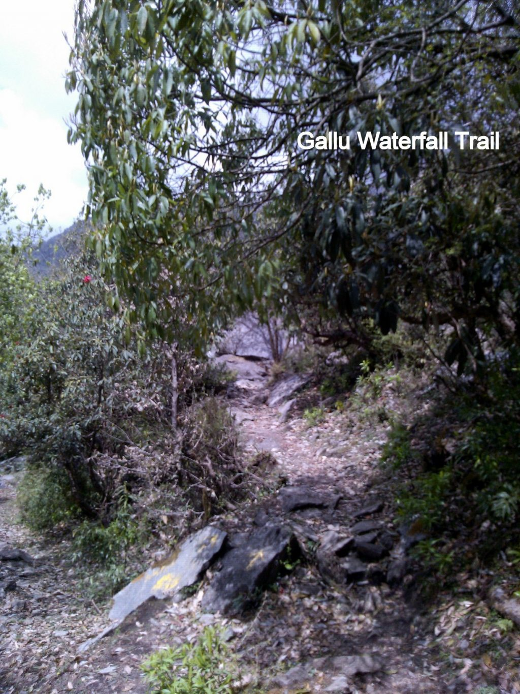 Gallu Waterfall Trail