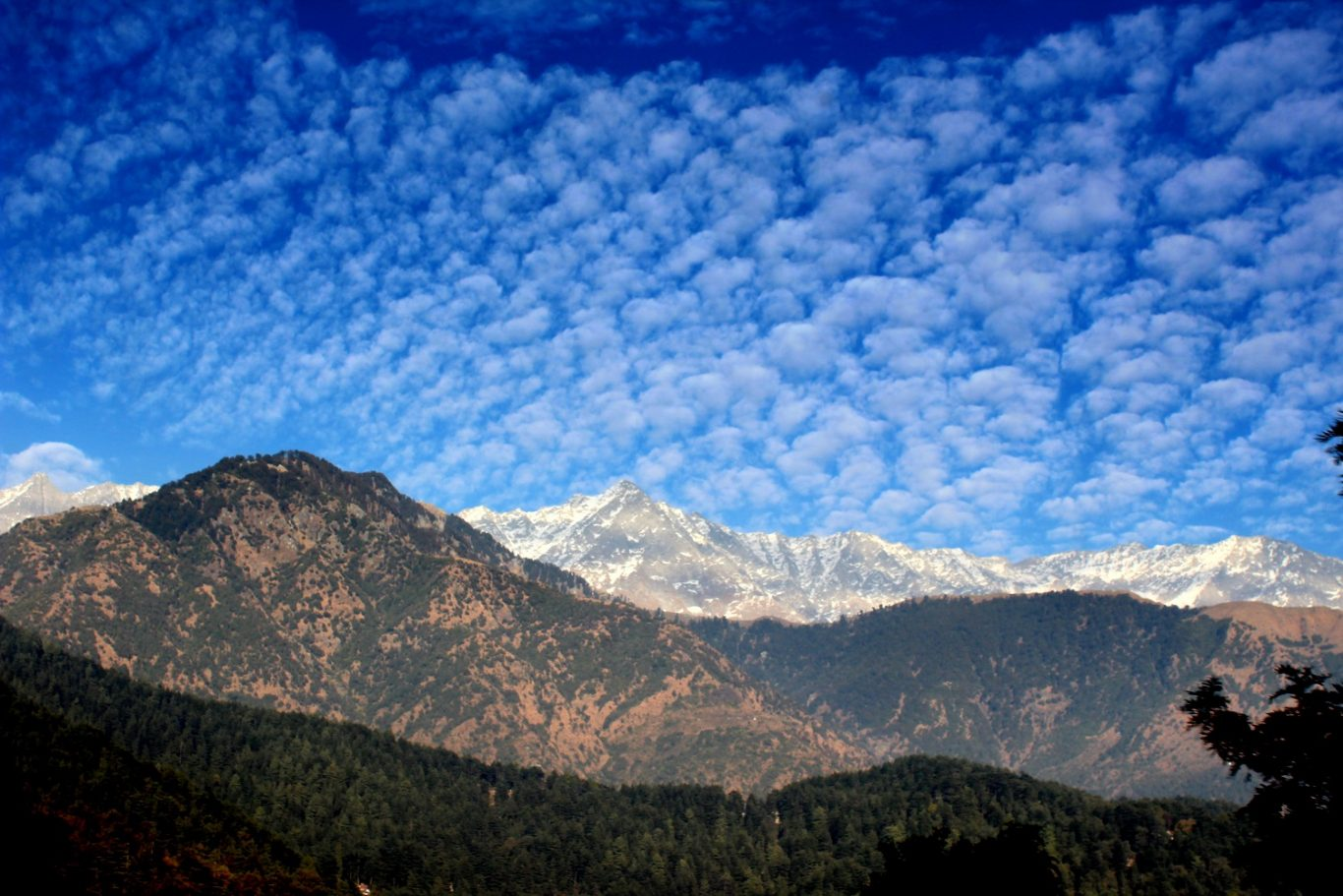 Dhauladhar and Triund Hill